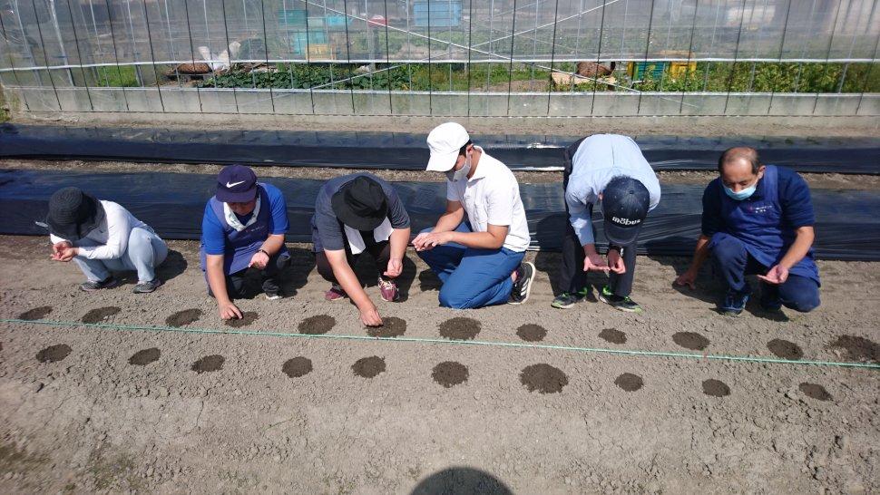 ありす202010農園種植え